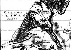 Cygnus X-3 - Did Cosmic Rays cause Human Evolution?