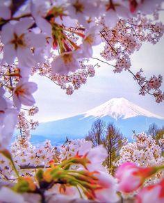 Посреди цветения Фудзияма ввысь вознеслась - В Японии весна! Сёу