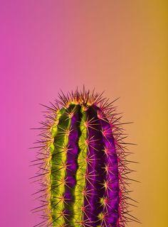 everything is beautiful Phone Backgrounds, Wallpaper Backgrounds, Iphone Wallpaper, Arte Marilyn Monroe, Natur Wallpaper, Cactus Planta, Cactus Cactus, Image Deco, Neon