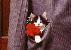 oh little kitties are wonderful
