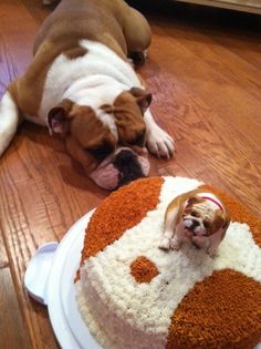 Why dat #dog sittin on my #cake ??