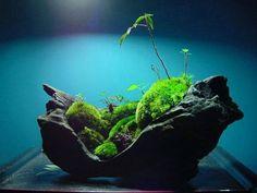 kokedama - ikebana - kusamono - végétaux - japon - art