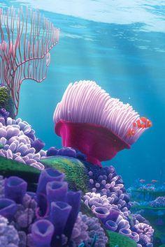Finding Nemo love this movie Disney Dream, Disney Love, Disney Magic, Disney Art, Walt Disney, Foto Macro, Water Life, Ocean Creatures, Finding Nemo