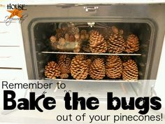Bake the bugs and the seeds out of your pine cones. Part of the baking is to open up the cone & dry out the seeds so the cones be easily shaken in a bag so the seeds dislodge into the bag & not in your home.
