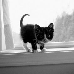 Here's another kitten that I would pick up and keep in a heartbeat.