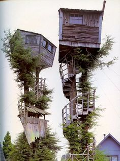 This evokes a childhood longing to live inside the movie Swiss Family Robinson (or, technically, their house.)