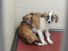 Meet+Chooper,+a+Petfinder+adoptable+Feist+Dog+|+Pikeville,+KY+|+Thank+you+for+taking+the+time+to+view+a+pet+from+the+Pike+County+Animal+Shelter!++If+you+are...