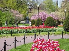 My velvet escape travel tip: Boston Wind World, Places In Boston, Boston Public Garden, Boston Common, Boston Travel, Famous Gardens, Boston Strong, What A Wonderful World, Park City