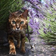 Don't you wish you could look this beautiful on a nature walk? | 22 Cats That Are Prettier Than Any Human Could Ever Be