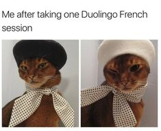 oui oui<—— XD that's great! Also, that's a really pretty cat.