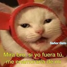 Funny Reaction Pictures, Funny Pictures, Funny Spanish Memes, Frases Humor, Cute Memes, Wholesome Memes, Meme Faces, Stupid Memes, Mood Pics