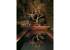 focal point - tree | shrader design
