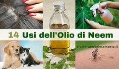 Tutti gli usi dell'olio di neem: eliminare la forfora, psoriasi, eczema, antiparassitario per cani e gatti, pidocchi, acne, brufoli, batteri, infiammazioni.