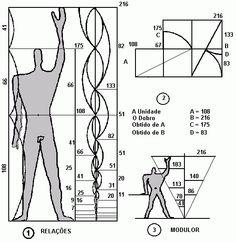 Fibonacci applied to human anatomy