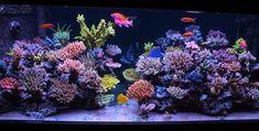 Reef Aquarium, Aquarium Fish Tank, Aquarium Ideas, Saltwater Fish Tanks, Saltwater Aquarium, Nano Reef Tank, Reef Tanks, Aquarium Maintenance, Brine Shrimp