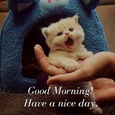 Have a nice day. Good Morning Animals, Very Good Morning Images, Good Morning Wishes Friends, Good Morning Beautiful Pictures, Good Morning Sister, Good Morning Beautiful Quotes, Good Morning My Love, Good Morning Funny, Good Morning Picture