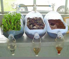 Effekt von pflanzen auf die filterung von wasser