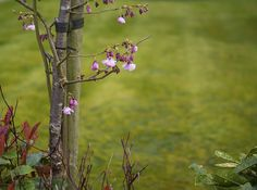 More Signs Of Spring by Dave Carter · 365 Project