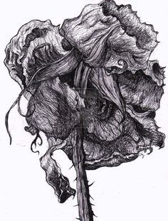 decaying flowers drawings - Google Search Natural Form Artists, Natural Forms, Biro Portrait, Decay Art, A Level Textiles, Growth And Decay, Drawing Sketches, Drawings, Art Folder