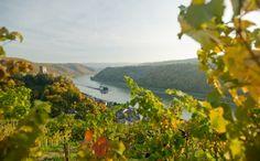 Luftner Rhinen