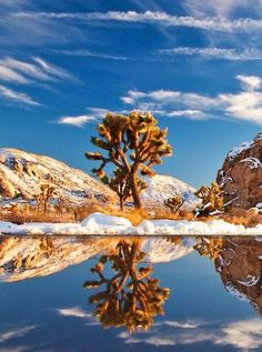 Joshua tree National Park, dans le sud de la CalifornieÀ cheval sur les déserts du Colorado et de Mojaves, le parc national Joshua Tree offre de splendides étendues arides, sur lesquelles poussent ça et là des arbres Joshua, une espèce que l'on ne retrouve que dans le sud-ouest des Etats-Unis et qui peut vivre jusqu'à 200 ans. Au printemps, les Joshua trees se couvrent de fleurs blanches.Voir l'épingle sur Pinterest / Via William Fisher