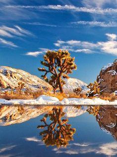 Joshua tree National Park, dans le sud de la CalifornieÀ cheval sur les déserts du Colorado et de Mojaves, le parc national Joshua Tree offre de splendides étendues arides, sur lesquelles poussent ça et là des arbres Joshua, une espèce que l'on ne retrouve que dans le sud-ouest des Etats-Unis et qui peut vivre jusqu'à 200 ans. Au printemps, les Joshua trees se couvrent de fleurs blanches.Voir l'épingle sur Pinterest/ Via William Fisher