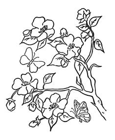 Elegant Coloring Pages Trees Plants And Flowers