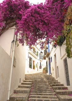 Spain. White and purple Oh wow. Can't wait!