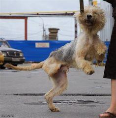 Pelastetaan koirat Pietarissa