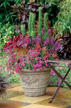 Tall, feathery 'Elegant Feather' and the wide, colorful leaves of coleus provide height and drama. Prolific pink and purple blooms fill out the front beautifully, while petunia-like Superbells tumble over the side for a romantic cascading effect. birdsandblooms.com