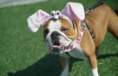 Easter With Pets: Hazards You Need to Know
