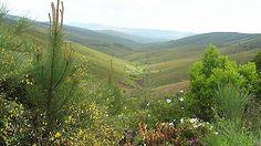 Serra da Malcata - PORTUGAL - Pesquisa Google