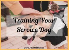 He has an important job to do, so make sure you find the in-depth training your service dog needs to give you safe and dependable assistance. Dog Grooming Clippers, Dog Grooming Shop, Big Dog House, Dog Organization, Durable Dog Toys, Cool Dog Houses, Best Dog Toys, Cute Dog Photos, Best Dog Training