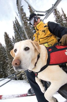 #Copper mountain by bob winsett avalanche rescue dog on the chairlift