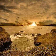 piedras blancas the place elephant seals call home home sun