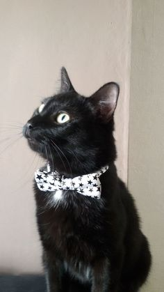 Do you like my bow tie? #european #cat #pet #cute