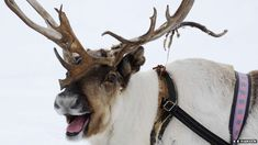 Which Reindeer Are You? | Playbuzz