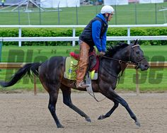 Caption: Ocho Ocho Ocho<br /> Horses on the track at Churchill Downs on Sat. April 25, 2015, in Louisville, Ky., in preparation for the Kentucky Derby and Kentucky Oaks.<br /> Works4_25_15 image008<br /> Photo by Anne M. Eberhardt