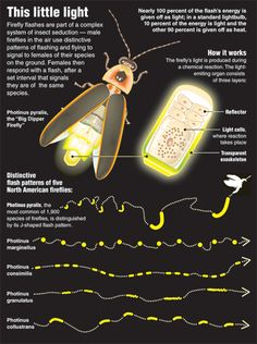 Fireflies talk to each other with light.
