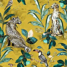 Cheetah Mustard wallpaper by Graduate Collection Mustard Wallpaper, Funky Wallpaper, Wall Wallpaper, Cheetah Wallpaper, Contemporary, Modern, Traditional Design, Designer Wallpaper, Newton Abbot