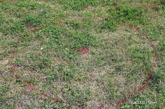 Where to Plant Blueberry Bushes and Preparing the Soil –