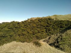Mt. Pulag Mossy Forest Mt Pulag, Country Roads, Outdoors, Places, Outdoor Rooms, Off Grid, Outdoor, Lugares