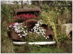 Rust in Peace....but grow lots of pretty flowers while rusting. I love old things like this!!