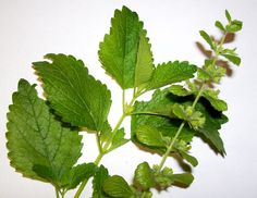 Plant Leaves, Herbs, Plants, Gardening, Food, Lawn And Garden, Essen, Herb, Meals