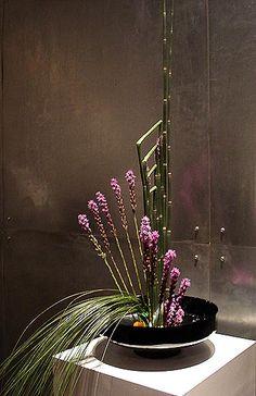 Equisetum, Liatris, Safflower, Steel grass