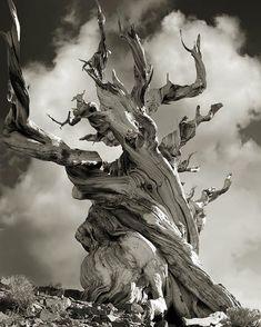 Dit vind ik een erg bijzondere foto. Want de donkere kleuren zorgen voor een statisch beeld, maar toch maakt de boom en de achtergrond het erg dynamisch door de prachtige houding van de boom