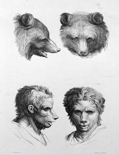 Como seríamos setivéssemos evoluído deoutros animais?