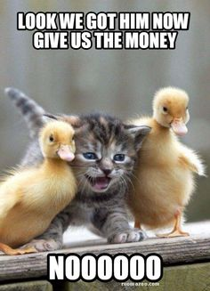 Give us the money funny animals meme pic best humor website…