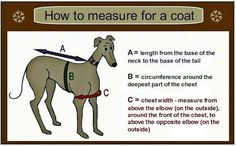 Image result for greyhound jackets free pattern