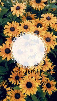 Sunflower Wallpaper, Flower Background Wallpaper, Flower Phone Wallpaper, Flower Backgrounds, Wallpaper Backgrounds, Framed Wallpaper, Graphic Wallpaper, Flower Graphic Design, Instagram Frame Template